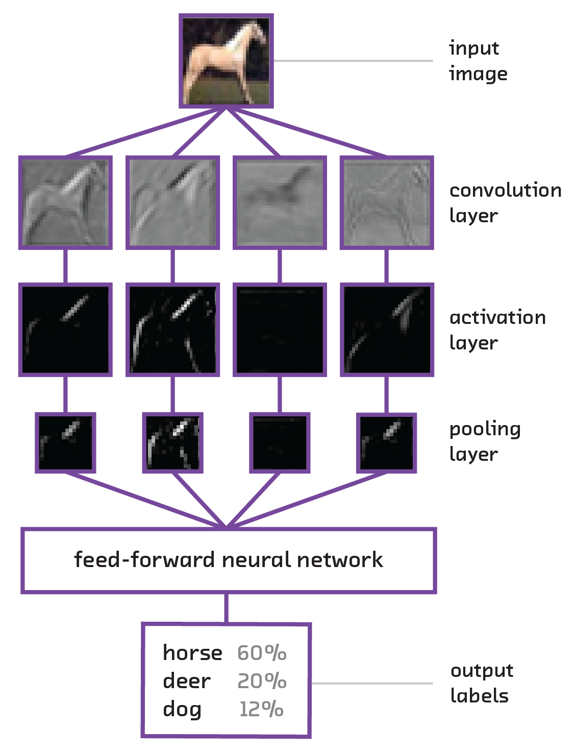 Figure of Convolutional Neural Network showing the processing of an image of a horse
